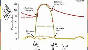 Heart K Graph And Cardiac Cycle
