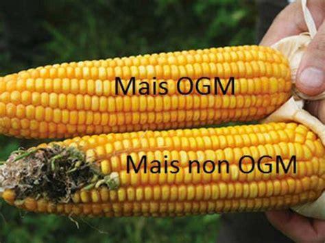 Alimenti Geneticamente Modificati Ogm Cosa Sono E A Cosa Servono Gli O G M Mangia Come