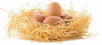 Eggs Egg Facts Reveals Important Norco Ranch