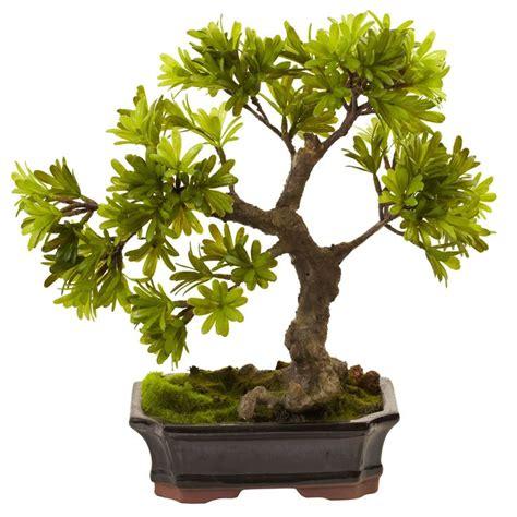 Bonsai Baum Preis by 25 Best Ideas About Podocarpus Bonsai On