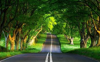 Amazing Road Forest Faxo