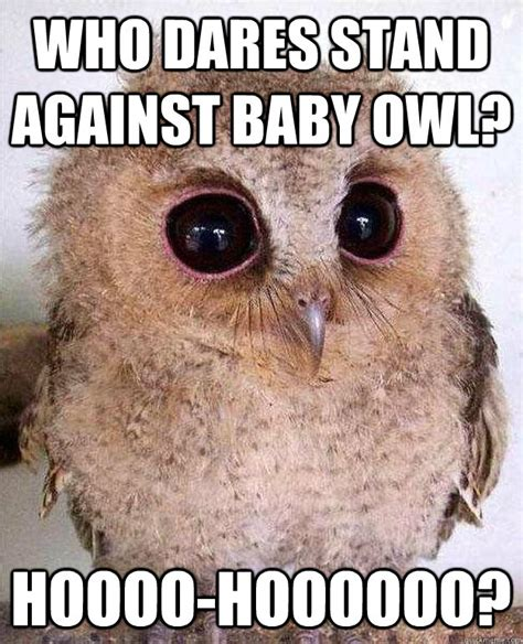 Who Owl Meme - who dares stand against baby owl hoooo hoooooo who stands against baby owl quickmeme