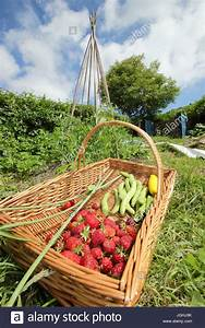 Einen Korb Bekommen Englisch : english vegetable garden stockfotos english vegetable garden bilder alamy ~ Orissabook.com Haus und Dekorationen