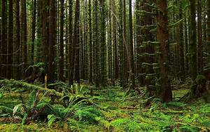 Forest trees moss fern flora nature landscape wallpaper ...