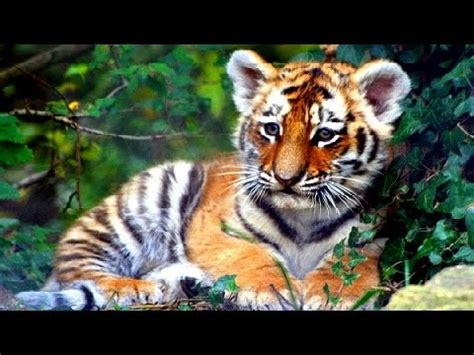 cute baby wild animals youtube