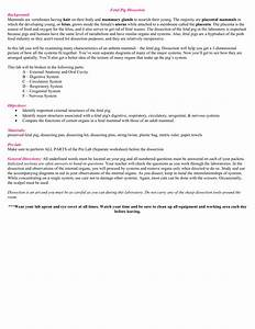 Fetal Pig Dissection Instructions