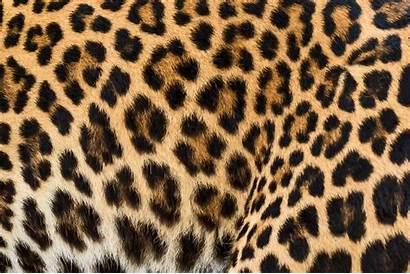 Leopard Nature Patterns Spots Stripes Fur Cheetah