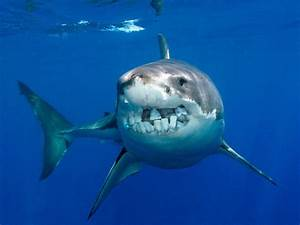 What Sharks Would Look Like If They Had Human Teeth