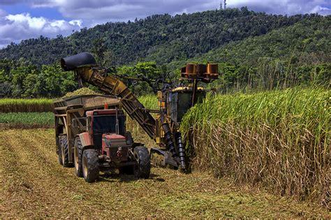Cane - Queensland Farmers' Federation