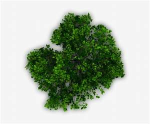 Download, Transparent, Tree, Plan, Png, Download, -, Trees, Plan, Png, For, Photoshop