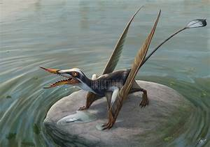 Rhamphorhynchus - Facts and Pictures