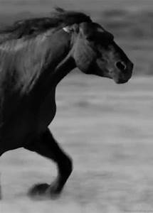 Pin by Brenda Nimmo on Love! | Pinterest | Horses, Running ...