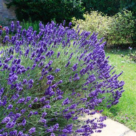 plantes d ext 233 rieur sans arrosage 15 photos pour faire votre choix c 244 t 233 maison
