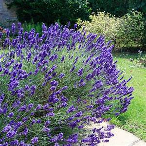 Plantes Pour Jardin Japonais Exterieur : plante sans entretien exterieur l 39 univers du jardin ~ Premium-room.com Idées de Décoration