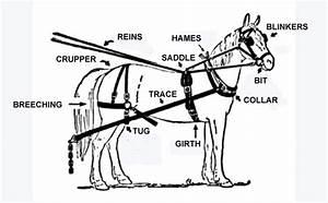 Draft Horse Harness Parts Diagram