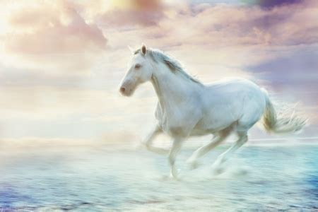 white horse horses animals background wallpapers