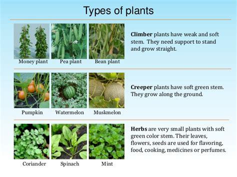 types of plants environmental science evs plants around us class iii