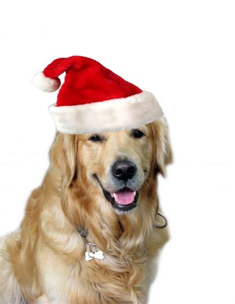 dog santa golden に対する画像結果