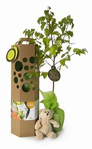 Geschenke Auf Rechnung Bestellen : geburtsbaum von schenkeinb umchen auf kaufen ~ Themetempest.com Abrechnung