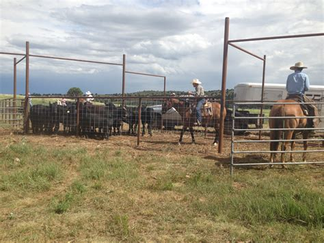 Ranch Diaries Is It Worth It To Raise Our Calves