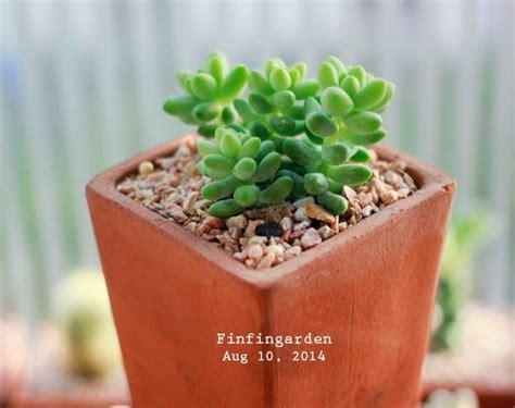 FinFinGarden: รวงข้าว, กุหลาบหิน, wildlife, tree, green ...