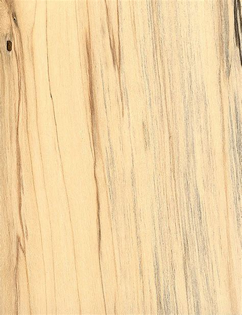 birch planks id gray birch the wood database lumber identification hardwood