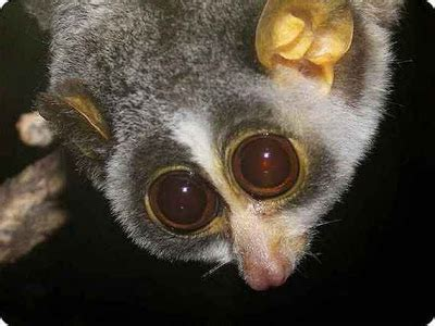 WEIRD NEWS: Weird and Ugly animals on Planet