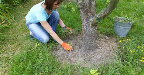 Praxis Boden Feucht Halten by Gartentipps F 252 R Den Nutzgarten Im Juni Mein Sch 246 Ner Garten