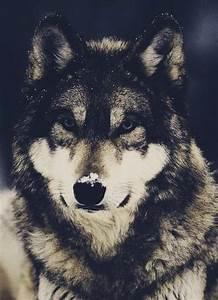 tv: tierra de lobos | Tumblr