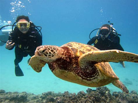 dive in top 10 best diving places