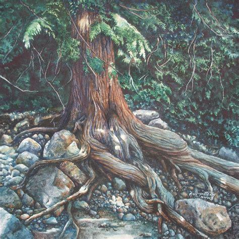 cedar tree root system cedar tree root art crafts