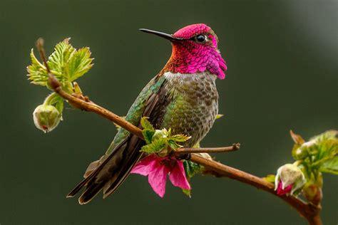 easy  safe perches  hummingbirds
