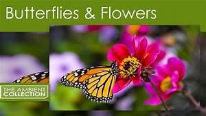 Butterflies And Flowers Dvd
