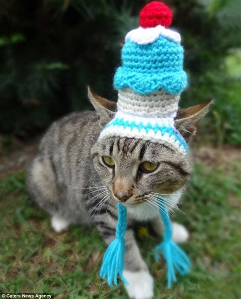 hats for cats feline fashion warehouse artist creates colourful collection of hats for cats that