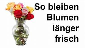 Schnittblumen Länger Frisch : so bleiben schnittblumen l nger frisch youtube ~ Watch28wear.com Haus und Dekorationen