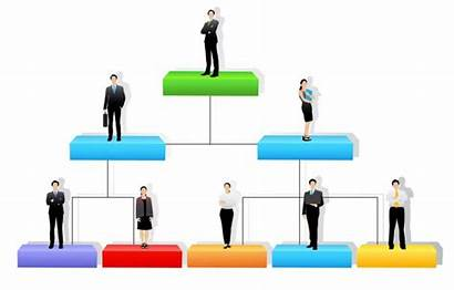 Structure Organizational Structures Hierarchy Organisation Common Company
