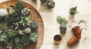 Comment Entretenir Un Cactus : r ussir le rempotage du cactus ~ Nature-et-papiers.com Idées de Décoration
