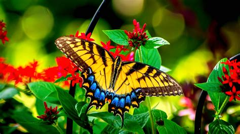 Mind Blowing Wallpapers Hd 15 Spectacular Butterfly On Flower Images Hd Morewallpapers Com