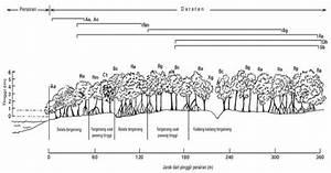 Hutan Mangrove  Pola Zonasi Pada Mangrove