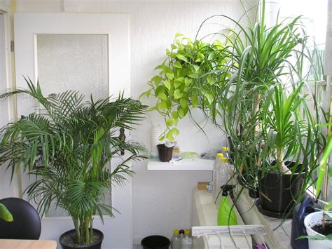Pflanzen Im Zimmer by Pflanzen Im Schlafzimmer Pflanzenfreunde