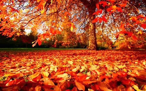 beautiful autumn wallpapers  wow style
