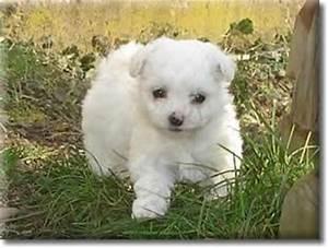 Bodenbelag Für Hunde Geeignet : nicht haarende welpen hunde f r allergiker geeignet 807123 ~ Lizthompson.info Haus und Dekorationen