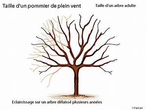 Comment Tailler Un Pommier : comment et quand tailler le pommier de plein vent ~ Dode.kayakingforconservation.com Idées de Décoration