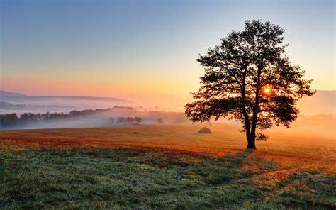 fields sunrises  sunsets trees nature