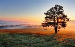 Fields, Sunrises, And, Sunsets, Trees, Nature, 408116