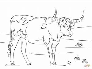 Longhorn Coloring Page Free Printable Coloring Pages