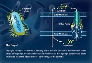 Mining Marine Microbes For New Drugs   Oceanus Magazine