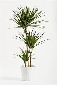 Surfacer Une Plante D39intrieur