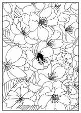 Coloring Cherry Tree Adult Flowers Pages Exclusive Adults Mizu Vegetation sketch template