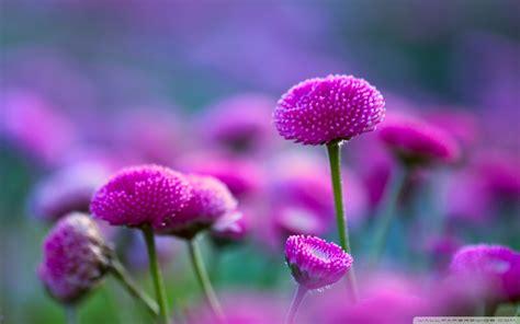Beautiful Flowers Wallpaper (60+ Images